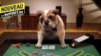 BetFirst casino Lucky mascotte chien jetons cartes